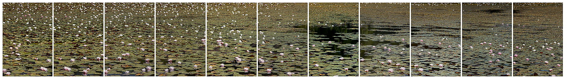 11_FL173-Sandwich-Pond-Two_18_3